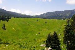 高山牧场地 库存照片
