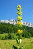 黄色植物 免版税库存照片