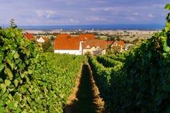 Αμπελώνας σταφυλιών κρασιού στο ηλιοβασίλεμα, φθινόπωρο στη Γαλλία Στοκ Εικόνες