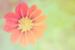 花 图库摄影