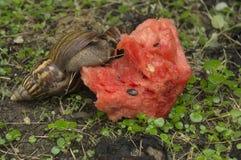 蜗牛子弹缓慢的草特写镜头自然地面概念 免版税库存图片