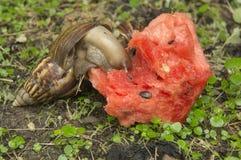 蜗牛子弹缓慢的草特写镜头自然地面概念 库存图片