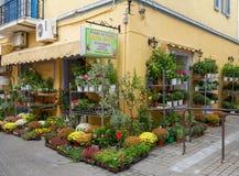 在埃伊纳岛海岛的典型的花店 免版税库存照片