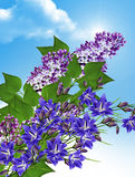 在蓝天背景的淡紫色分支与云彩的 免版税库存照片