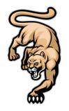 爬行的美洲狮 免版税库存图片