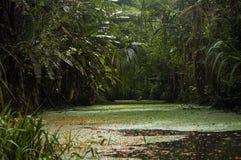 密林小河,哥斯达黎加 免版税图库摄影