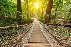 吊桥在森林里 免版税库存图片