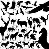 животные Стоковые Изображения