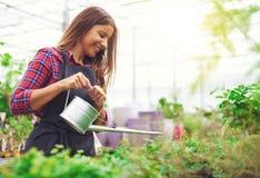 年轻托儿所所有者浇灌的盆的植物 图库摄影