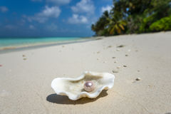 打开与一颗珍珠的壳在热带沙滩 免版税库存图片
