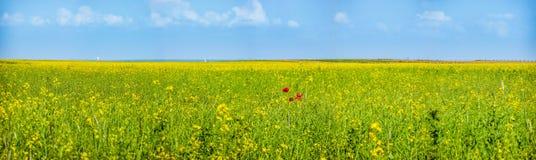 在草甸的五颜六色的开花的野花春天的 库存照片