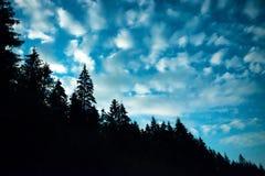 Черный лес с деревьями над голубым ночным небом Стоковая Фотография RF