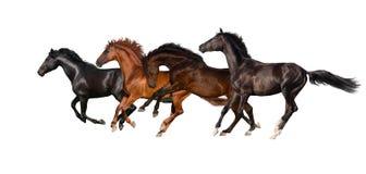 马奔跑疾驰牧群  免版税库存图片