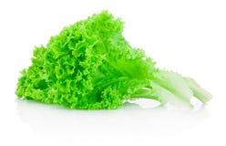 在白色背景隔绝的新鲜的绿色散叶莴苣 免版税库存照片