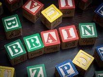 脑子概念 图库摄影
