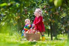 使用在苹果树庭院里的孩子 库存照片
