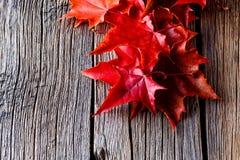 秋天森林背景 在叶子的秋天在被风化的桌上 图库摄影