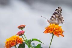 Бабочка и цветки Стоковые Изображения