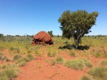 澳大利亚白蚁蚂蚁与树的在内地小山土墩 免版税库存照片