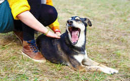 Женщина с лугами собаки весной усмехаться собаки Стоковые Изображения RF