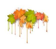 秋天传染媒介水滴油漆叶子 免版税库存照片