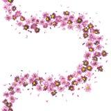 紫罗兰色花曲线 免版税库存照片