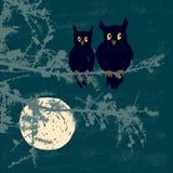Κουκουβάγιες στη νύχτα σεληνόφωτου Στοκ φωτογραφία με δικαίωμα ελεύθερης χρήσης