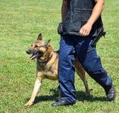 有他的狗的警察 免版税库存图片