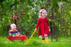 使用在苹果树庭院里的孩子 图库摄影