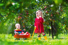 使用在苹果树庭院里的孩子 库存图片