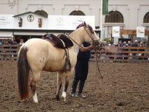 有马的印第安人混血儿 免版税库存照片