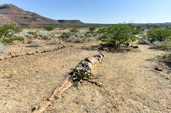 化石森林,纳米比亚 免版税库存照片