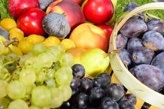 各种各样的季节性果子, 免版税库存图片