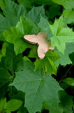 Ξύλινη πεταλούδα σε ένα υπόβαθρο των πράσινων φύλλων ενός δέντρου Στοκ Εικόνα