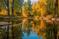 树的镜象反射在湖 免版税库存图片