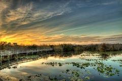 平静的圣所-美洲蛇鸟足迹沼泽地日落 库存照片