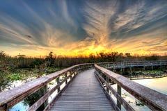 灼烧的天空的木板走道-美洲蛇鸟足迹沼泽地日落 免版税库存图片