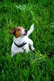 被抢救的狗娱乐时间 免版税库存照片