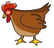 母鸡 免版税图库摄影
