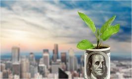 货币成长 库存图片
