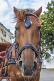 Ρύγχος του αλόγου Στοκ φωτογραφίες με δικαίωμα ελεύθερης χρήσης