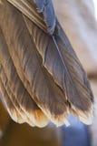 Κουκουβάγια φτερών Στοκ εικόνα με δικαίωμα ελεύθερης χρήσης