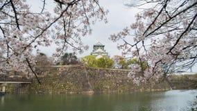 与樱花的日本大阪城堡 日本春天视图 库存照片