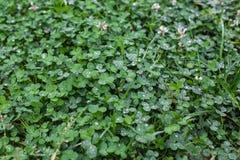 η δροσιά ρίχνει τα φύλλα Στοκ φωτογραφία με δικαίωμα ελεύθερης χρήσης