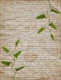 与干燥植物的老葡萄酒报纸纹理 免版税库存照片