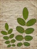 与干燥植物的老葡萄酒报纸背景 免版税库存图片