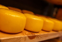 Голландский сыр Стоковая Фотография RF