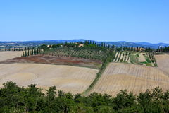 托斯卡纳的橄榄树小树林风景 免版税库存图片