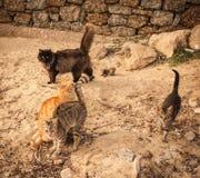 在海滩的猫,米科诺斯,希腊 免版税图库摄影