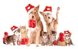 小组与圣诞老人帽子和礼物的动物 免版税库存照片